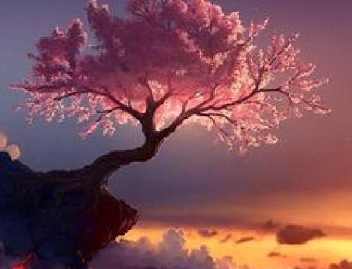 Immortalisez vos cerisiers en fleurs